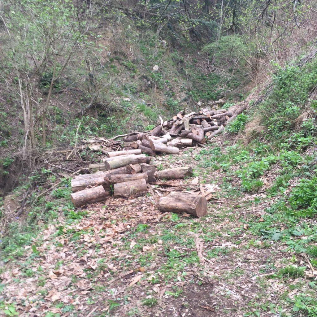 la dura fatica della legna